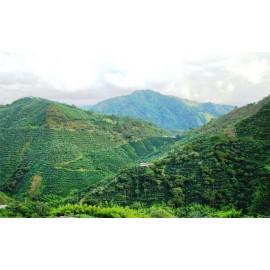 Colombie Valle del Cauca - Planadas - Granja La Esperanza - Finca Potosi - 250g