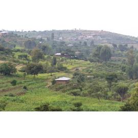 Moka Harrar (Ethiopie)- 250g