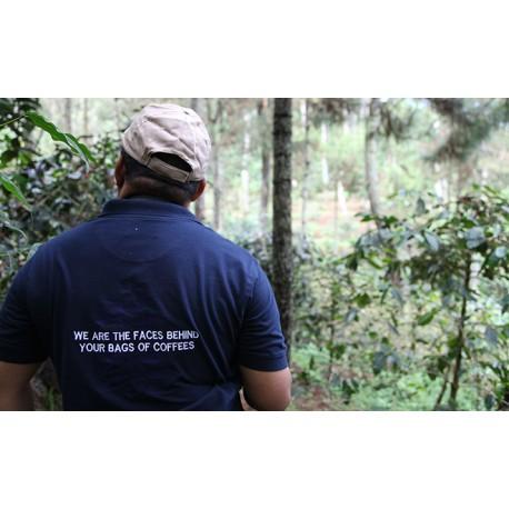 Indonésie Sumatra Gayo Mountain Issu de l' Agriculture Biologique
