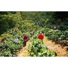 Méxique Tapachula Chiapas issu de l'Agriculture Biologique - 250g