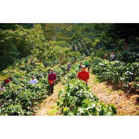 Méxique Tapachula Chiapas issu de l'Agriculture Biologique